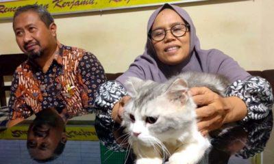 Mengharukan, Seorang Ibu Bertemu Kucing Kesayangan Keluarga Berkat Polisi Singosari