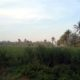 Areal Tanah Bengkok Desa Druju. (tim)