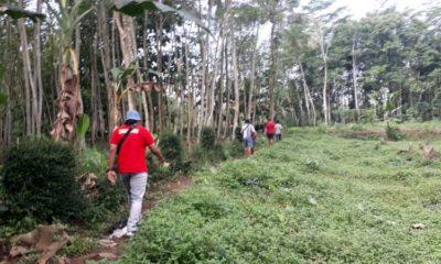 Warga Desa Tegalsari Kepanjen Digegerkan Penampakan Ular Raksasa